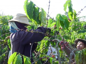Coffee farmers in Vietnam