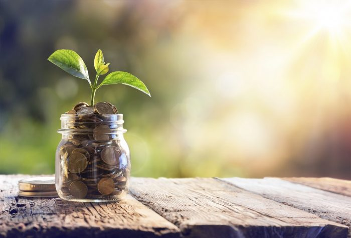 Plant growing from jar with coins- cost of certification