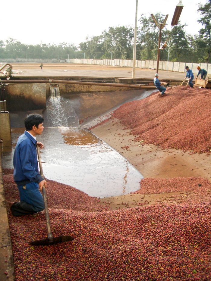 Washed process of coffee cherries in Vietnam