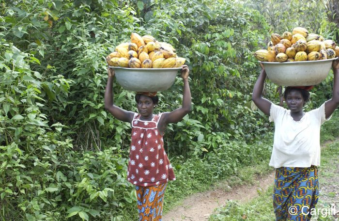 Women carrying cocoa pods during harvest in Côte d'Ivoire