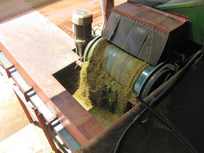 Rooibos cutting machine