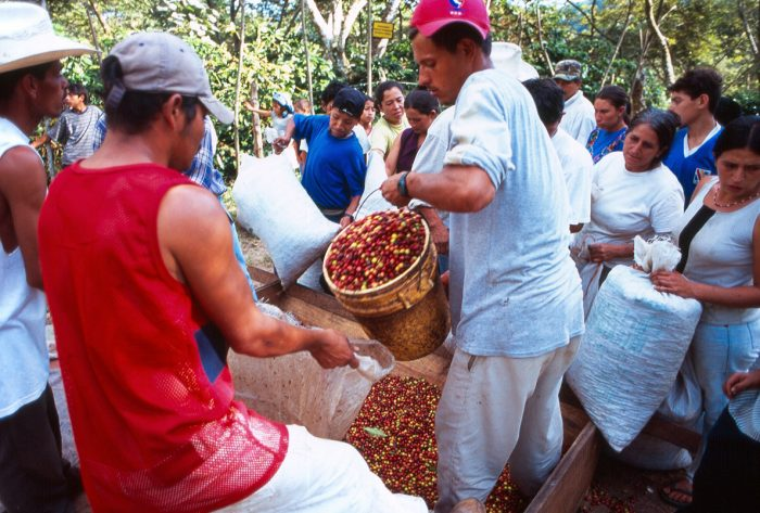 Coffee pickers in Honduras